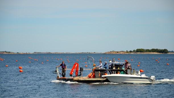 Renare Östersjön med hjälp av musslor