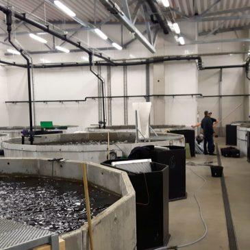 Kinesiskt statsbolag köper åländsk fiskodling