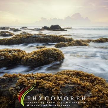 Nya riktlinjer för produktion av alger
